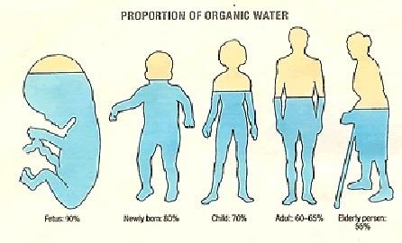 体内水分含有量.jpg